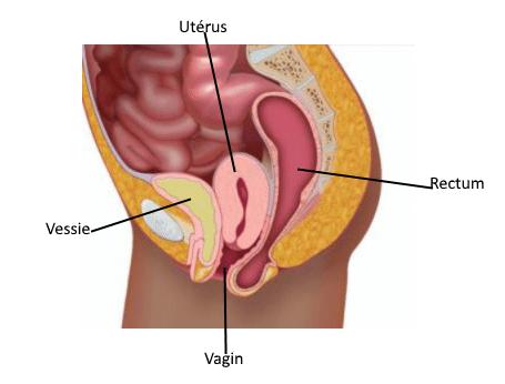 descente d'organes